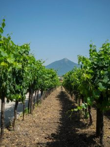 Family Vineyard Italy