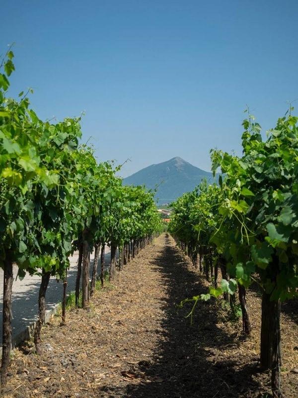 How to Experience the True Italian Culture- Venditti Vineyard