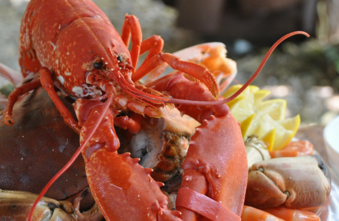 Great Seafood Restaurants in Naples, Fl